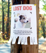Finding Your Lost Dog: How to successfully recover your escaped or missing pet