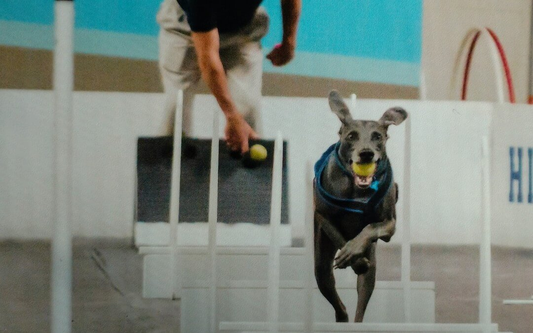 High Spirits Flyball Team Promotes Community at TCOTC