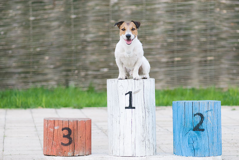 dog on trial podium